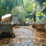 【東京23区の森散歩】和田堀公園:杉並区